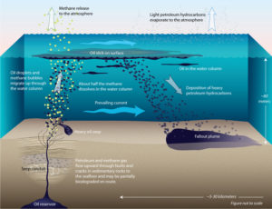 the route traveled by oil leaving the subseafloor reservoir as it travels through the water column to the surface and ultimately sinks and falls out in a plume shape onto the seafloor where it remains in the sediment.