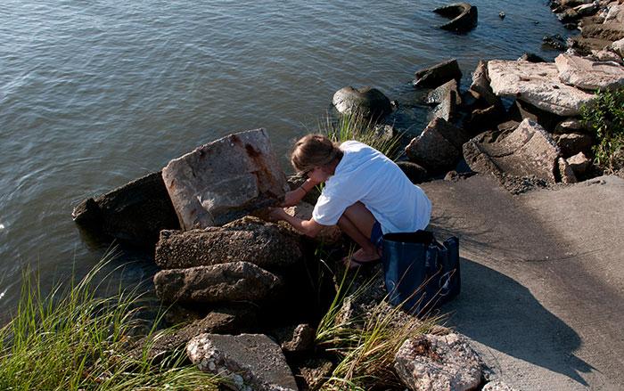 Gulf Coast Sample Repository