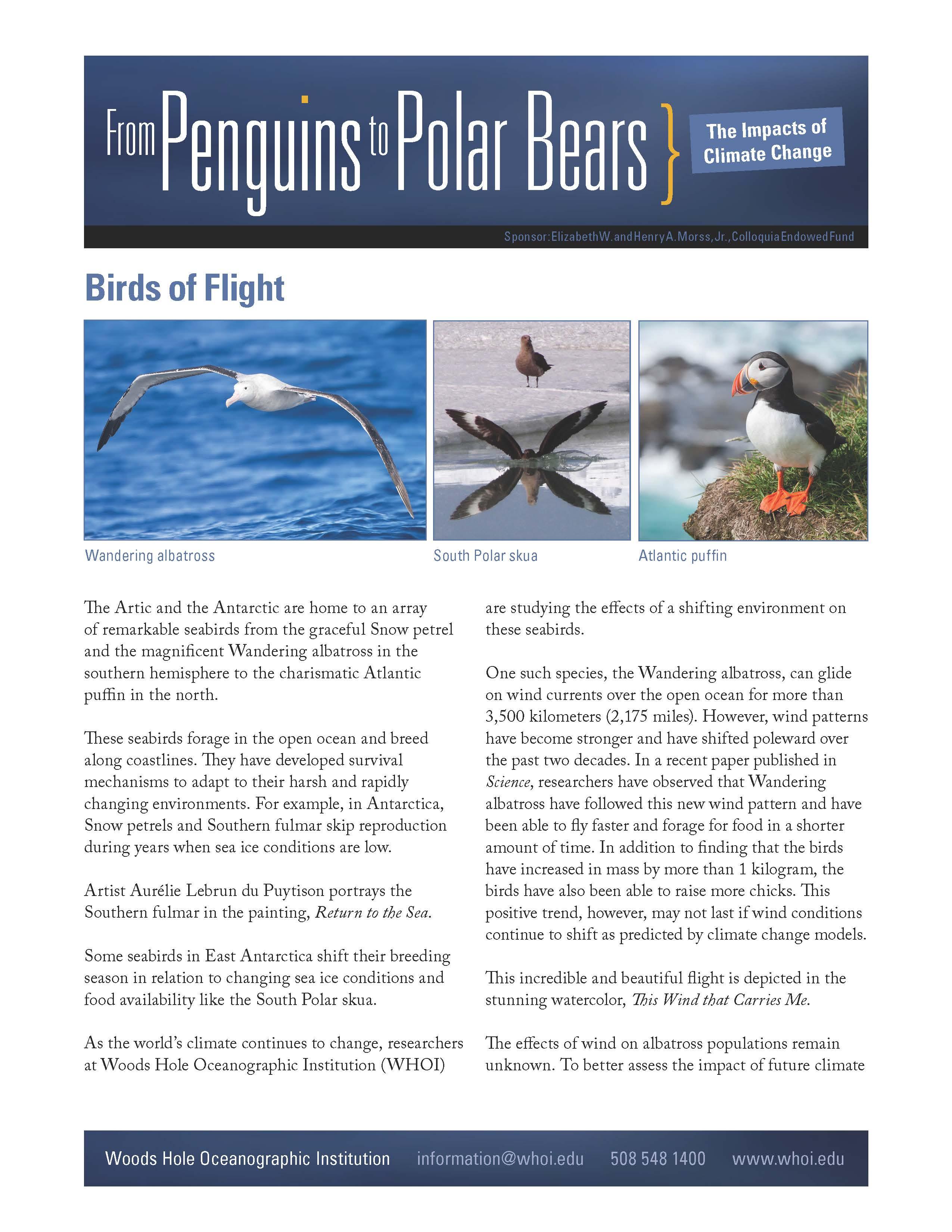 Birds Handout
