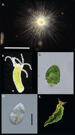 images of various organisms