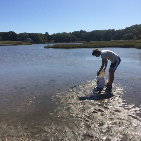 Undergraduate interns collect invertebrates in estuaries to study their parasites.