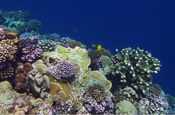 Coral Slide