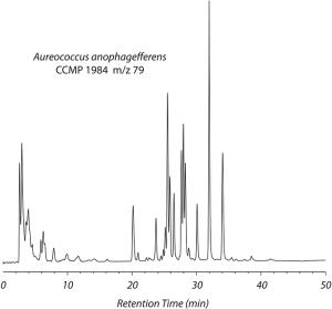 HPLC trace of DOP in spent culture media from the brown tide algae Aureococcus anophagefferens.