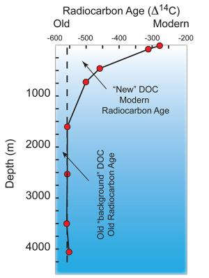 The distribution of DOC radiocarbon with depth in the water column.