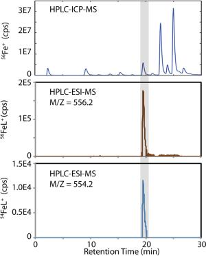 Characterization of iron ligands in Synechococcus PCC 7002