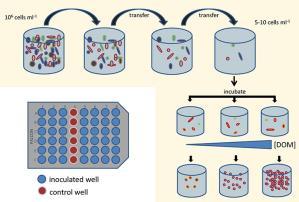 Extracellular hydrolysis