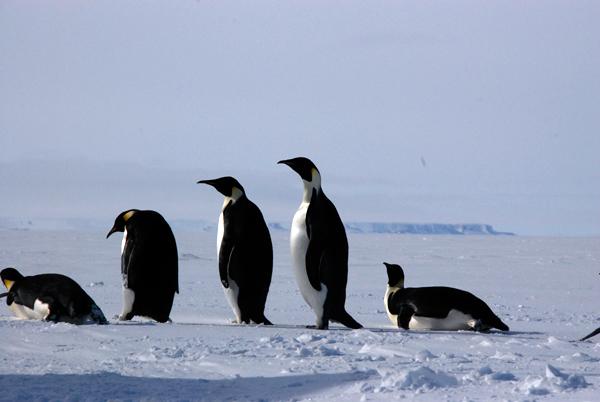 International Polar Year Project: Genomic and Proteomics of Polar Marine Phytoplankton 2009
