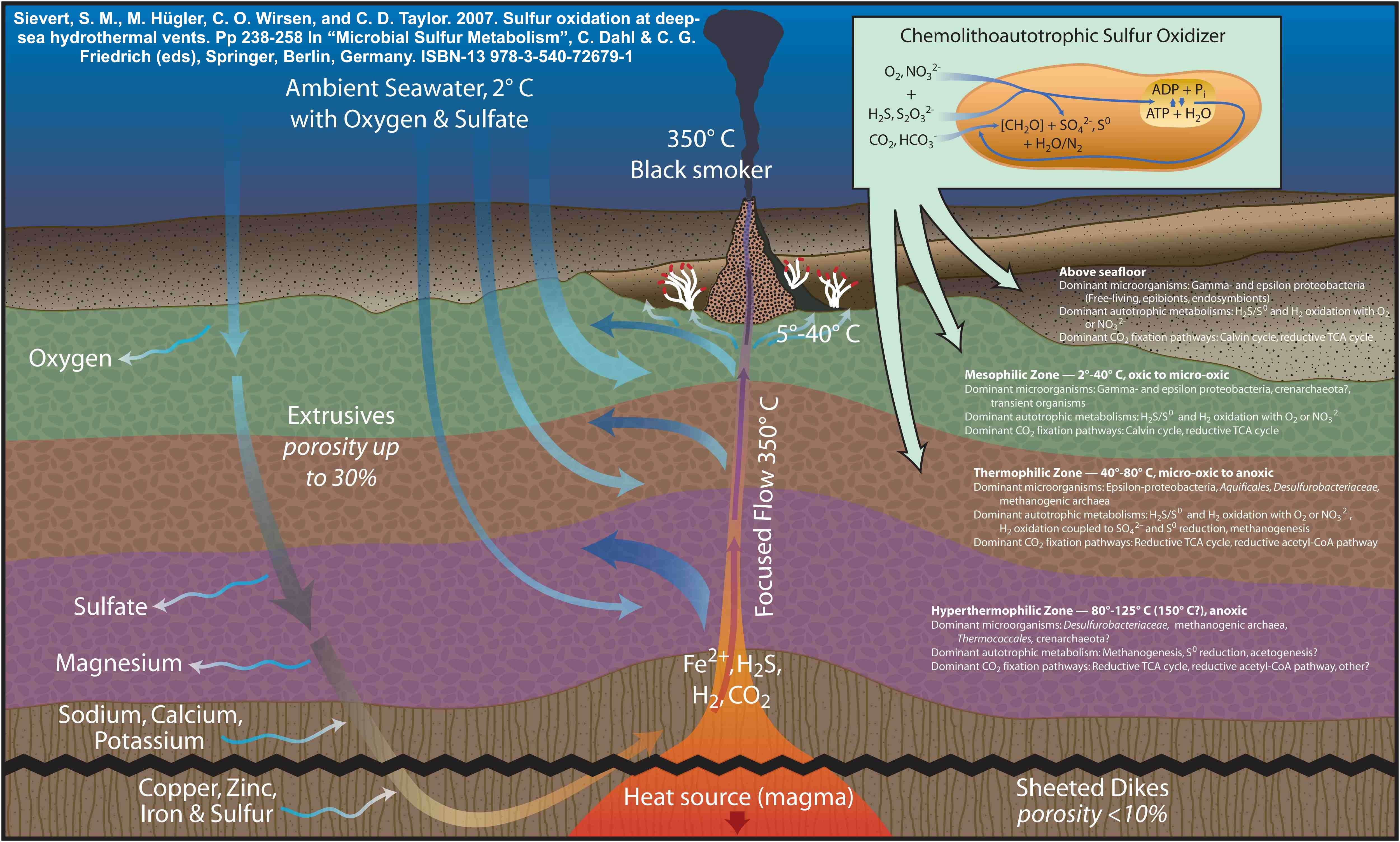 Schematic diagram depicting a mid-ocean ridge hydrothermal vent